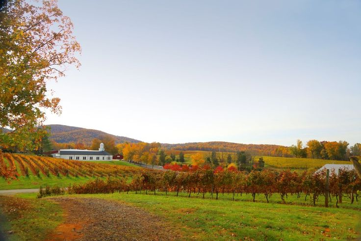 The following are a few popular places to recharge and experience Virginia wine country.