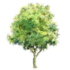 Image result for pinterest acuarelas arboles