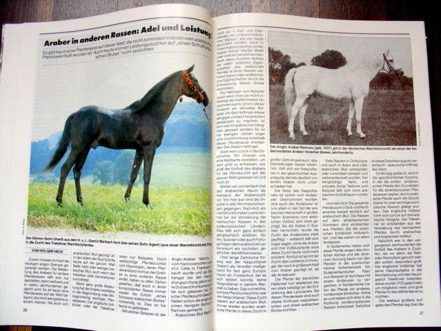 Araber * Pferde Heute Spezial * Gründerpferde Hengste Stuten * seltene Fotos