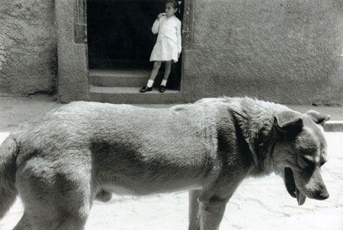 fotos maravillosas. Sergio Larraín, pintor chileno