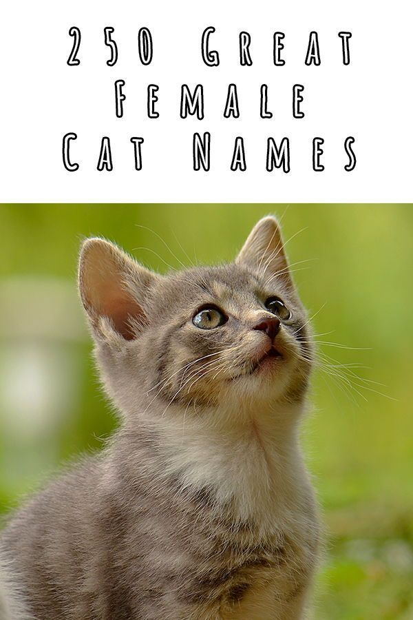 Girl Cat Names 250 Female Cat Names You Will Love By The Happy Cat Site In 2020 Cat Names Girl Cat Names Cats