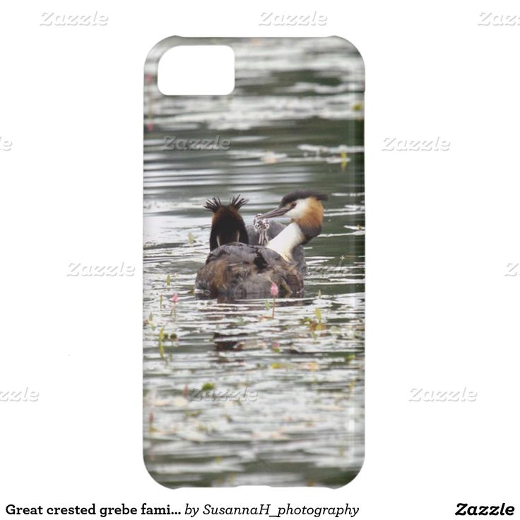 Great crested grebe family iPhone 5C case