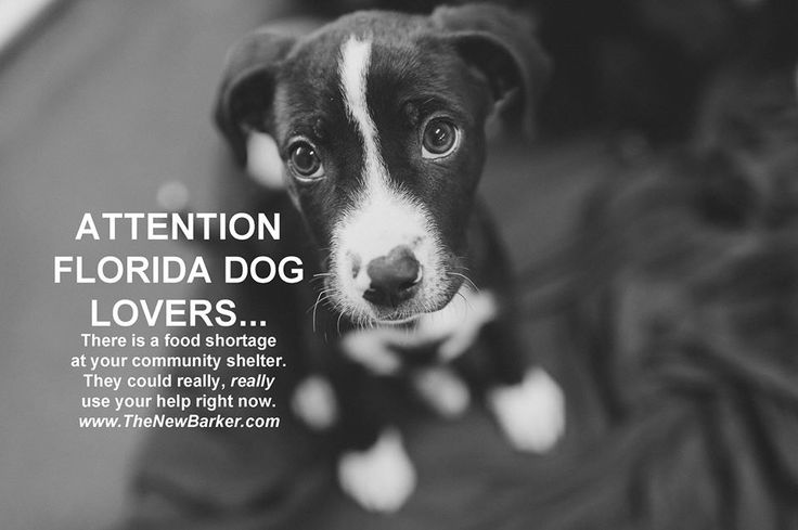 19+ Pinellas county animal control images