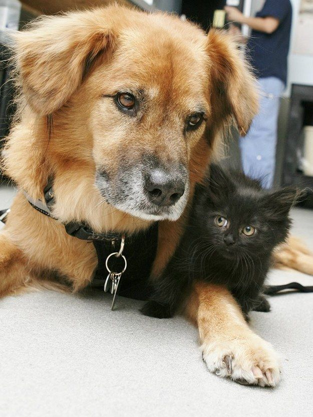Boots, the dog who survived Hurricane Katrina and now spends his days being a nanny for orphaned kittens. | 38 Dogs Who Won 2014