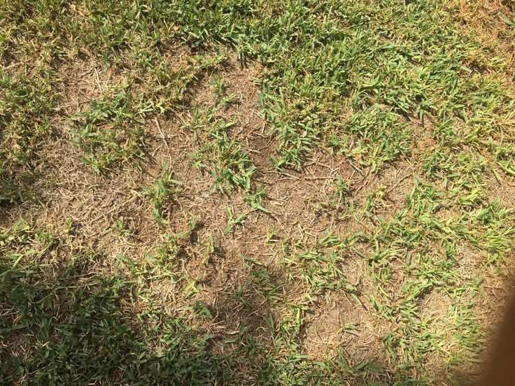 Anyone know whats happening to my grass? I thought it was