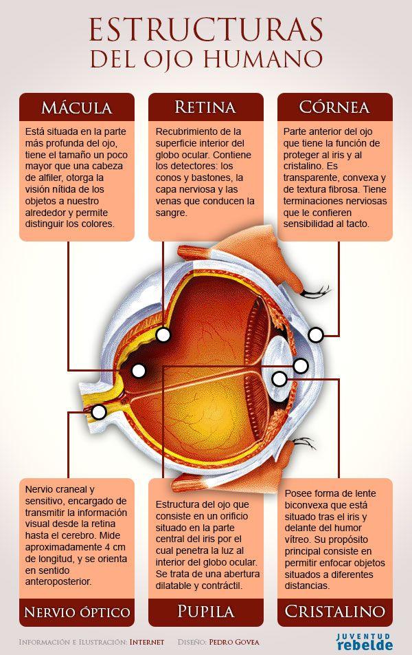 Infografía Estructuras del ojo humano