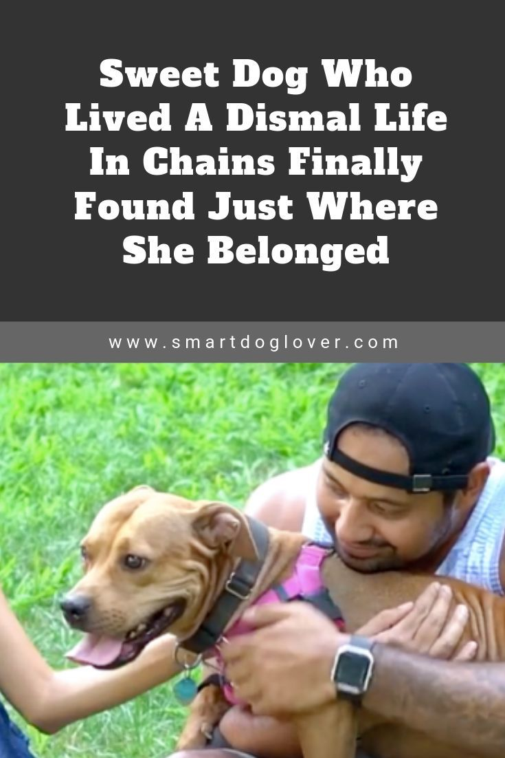 Sweet Dog Who Lived A Dismal Life In Chains Finally Found Just