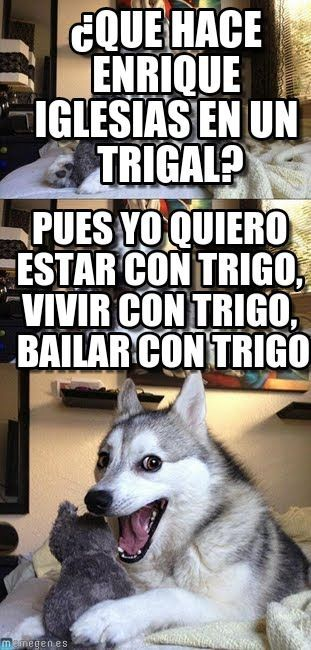 Pun Husky : ¿que Hace Enrique Iglesias En Un Trigal?, Pues Yo Quiero Estar Con Trigo, Vivir Con Trigo, Bailar Con Trigo - by Anonymous