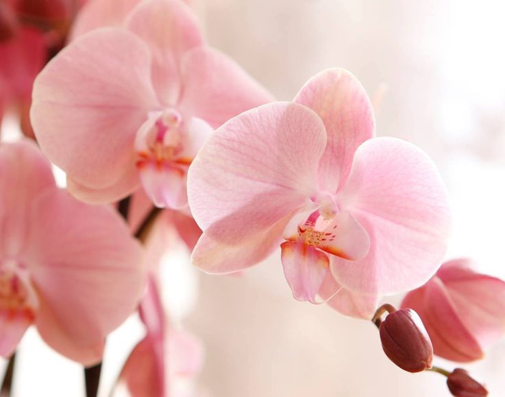 Pink mood #orchids #flowers