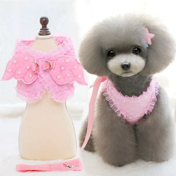 Soft Dog Harness Vest For Your Cute Angel     Tag a friend who would love this!     FREE Shipping Worldwide     Buy one here---> https://sheebapets.com/soft-dog-harness-vest-cute-angel-pet-clothes-collars-and-leads-puppy-cat-leash-brand-new-design-pinkbluewhite-xssml/