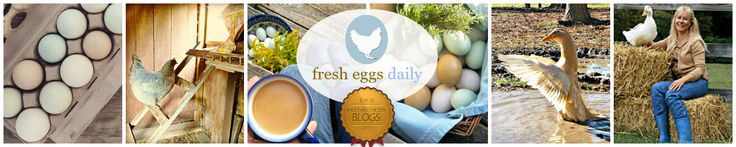 Fresh Eggs Daily®Chicken info galore, but also a page on how to catch/ repel flies!!!