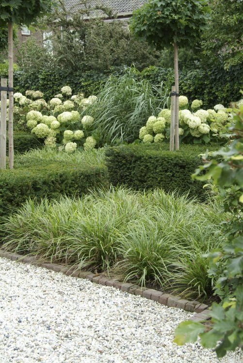 white & green garden using texture for interest, hydrangea, ornamental grasses, boxwood hedges