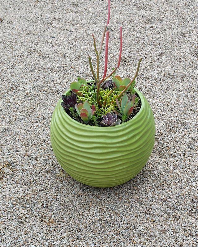 #salinasca #succulents #pot #succulentarrangement #greenpot #715tiogaavesandcityca93955 #sandcitycalifornia #seasideca #pacificgroveca #asilomarcalifornia #pebblebeach #carmel #carmelbythesea #carmelvillage #cachagua #carmelmission #carmelranch #zaratesoutdoorlivingartanddesign #desig #designer #gardening #garden #outdoors #sanfranciscoca #siliconvalley #hollisterca #watsonvilleca #castrovilleca #santacruzca #sanluisobispoca #hollisterlocals #montereylocals - posted by Mesoamerican Artist Jj…