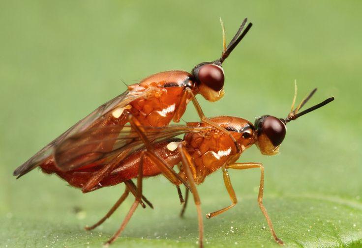「虫が最も集まるコンビニはどこ?」中学生の自由研究に注目