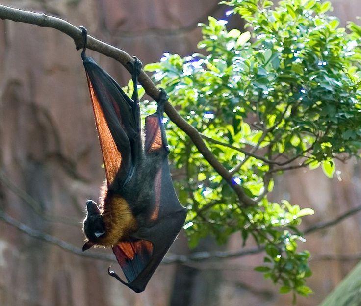 сняла картинка летучая мышь на дереве леди всегда
