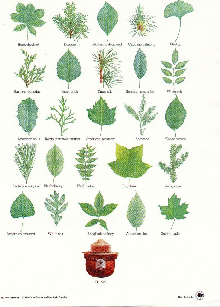 Plant Database: Hardwood Tree Identification By Leaf
