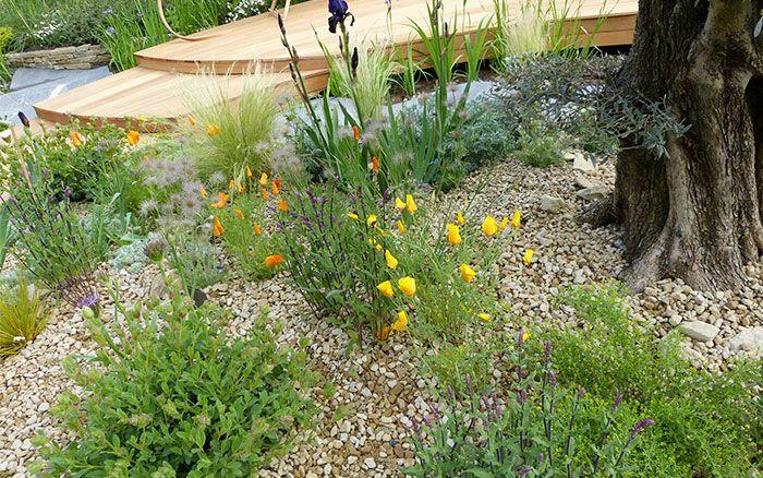dry-garden-2-rbc.jpg 700×438 pixels