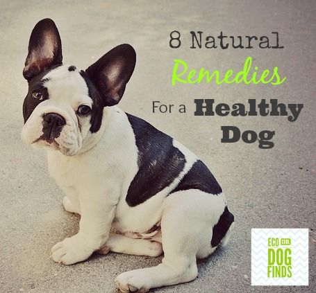 8 Natural Remedies for a Healthy Dog. Find great tips and tricks for raising a natural holistic dog.