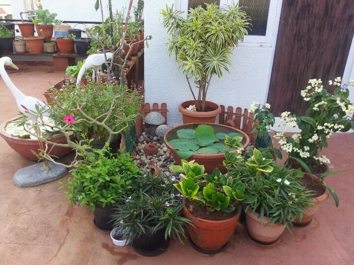 Home Garden Design Ideas India: Terrace Gardening....Indian Homes