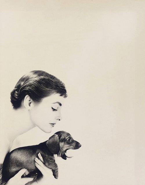 Lillian BassmanPhotos, Lillian Bassman, Dogs, Dachshund, Harpers Bazaars, Doxie, 1954, Lillianbassman, Photography