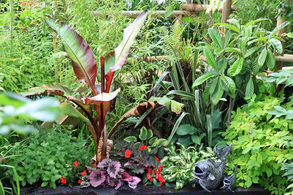 Tropical garden plants for the UK climate - like the idea of growing more tender plants.