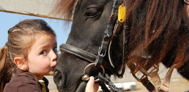 #ponyclub #kids #holiday Wee ones, pre-teens and teenagers are all very welcome at Katharine's Saturday Pony Club, the only   Pony Club UK Overseas Centre in Portugal.  A variety of Shetland ponies and horses to choose from.   http://www.greatholidaylocations.com/things-to-do/choose-an-activity/pony-club/