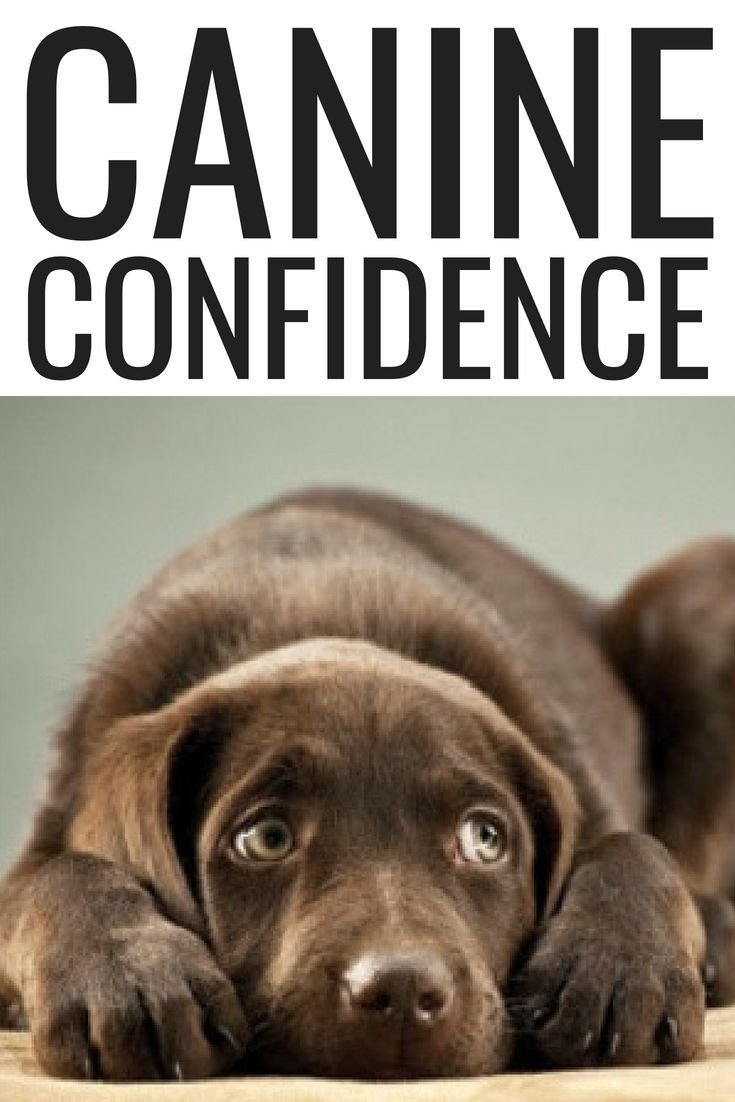 Canine Confidence Dog Training Tips Dog Training Dog Training Camp