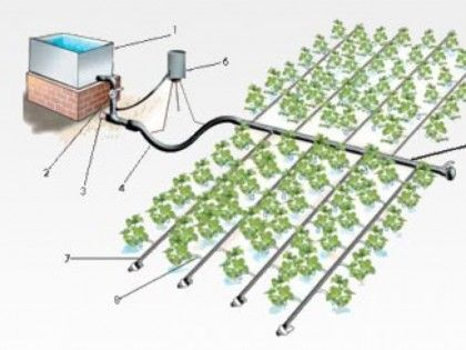Drip Irrigation by IDE