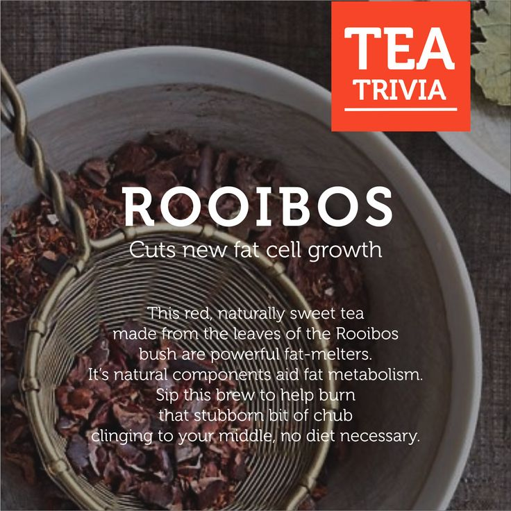 Rooibos is the best way to loose weight when you're crazy busy. Read here to know why!