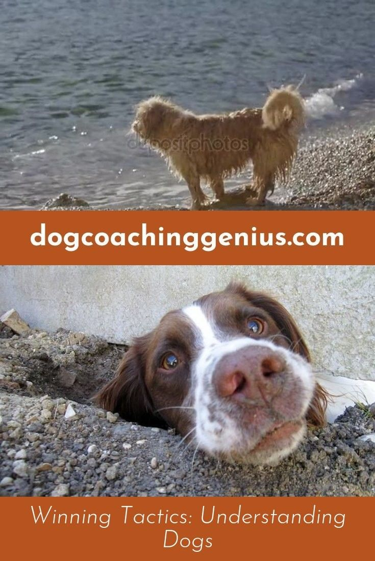 Go to the webpage to learn more on dog growling doggy psychology