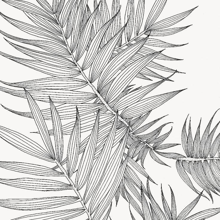 Resultado de imagen de scientific drawing leaf | Dibujos