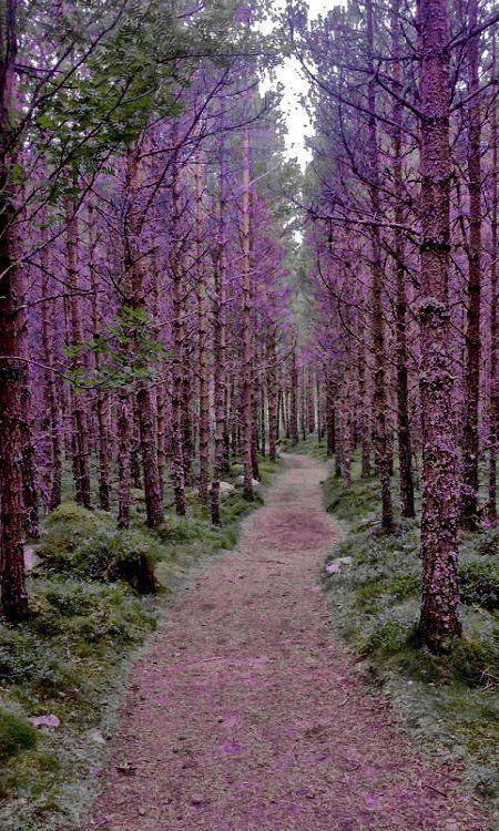 Purple Forest, Scotland. #worldtraveler
