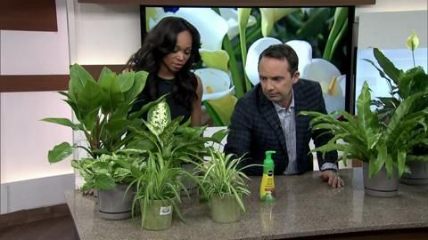Indoor Plants to clean air & add humidity - Healing properties of plants - Cityline