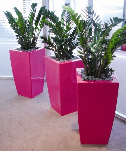 Hot Pink Kubiks planted with Zamioculcas