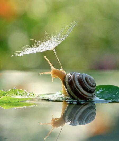 Photos of Snails -- captured using a macro lens by talented Ukrainian photographer Vyacheslav Mishchenko.