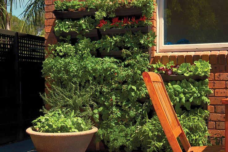 Fresh organic herbs grown as a living wall, thanks Vertical gardens