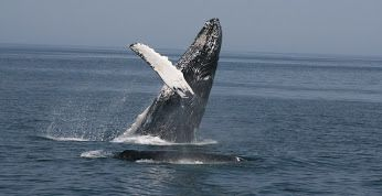 Tell Japan: End Illegal Antarctic Whaling Today! http://tak.pt/i/Vik8zE-V via @TakePart