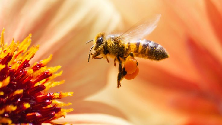 Host some pollinators this spring: make a bee hotel and watch the flowers bloom around you.