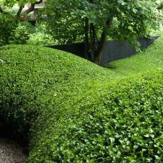 Organische groenblijvende vormen