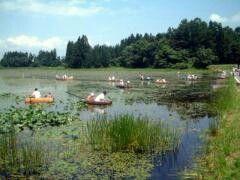 6月 山形県 村山市 じゅんさい採り体験