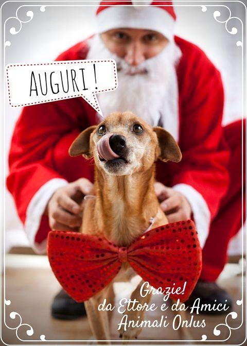#adotta un #cane a distanza questo Natale! www.amicianimali.org