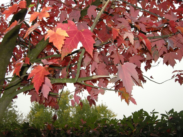 Fall leaves - Tacchino Raffaele Vini  http://www.facebook.com/pages/Tacchino-raffaele-vini/132154490142365