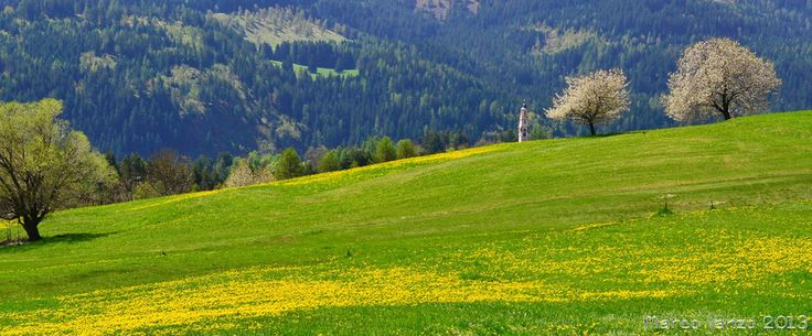 Yellow-green by Marco Vanzo on 500px