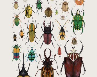 Criaturas de la orden Anura- vintage inspirado cartel de ciencia por Kelsey Oseid