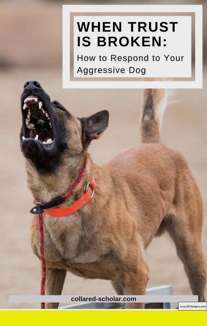 dog training anchorage