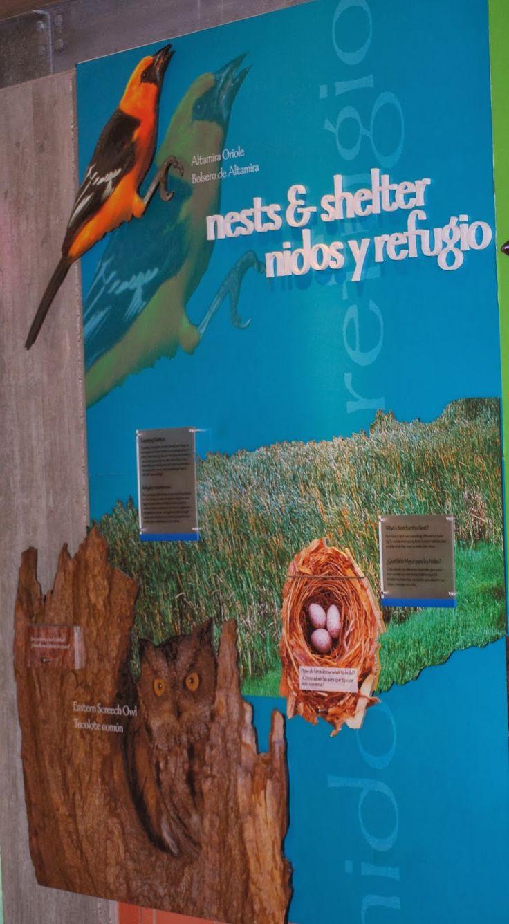 World Birding Center ~ Bentsen, TX Rio Grande Valley State Park Click on  the link