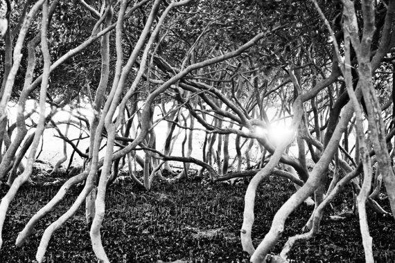 Mangrove Sunrise Bundeena Maianbar Sutherland Shire Sydney NSW