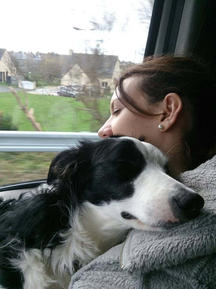 Top 10 Things Border Collies Dont Like                                                                                                                                                     More