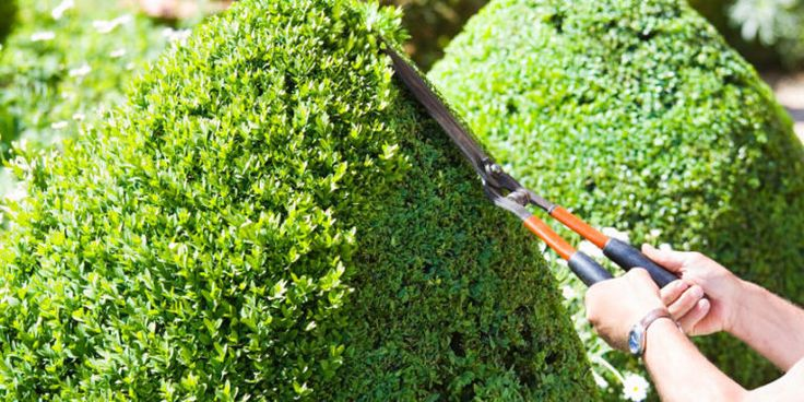 usually best to prune shrubs late winter/early spring except for evergreens in early summer, deadhead flowers late summer/early fall (leave dead blooms on to propagate and instead remove early spring); cut back 1/3 of shrub each year to thin out and allow light to reach roots, avoid heavy pruning late summer/early fall