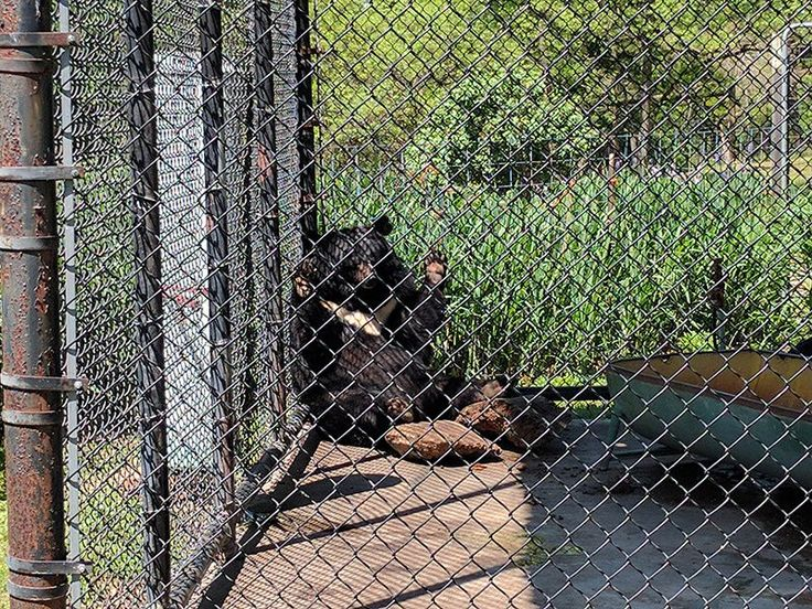 2371 Best Animal Abuse Images On Pinterest Animals